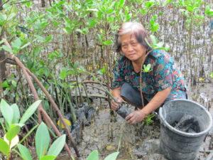 Pflanzen von Mangroven