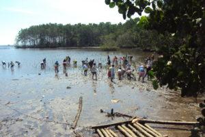 Anwohner helfen beim Mangroven pflanzen