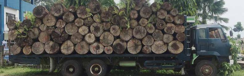Abholzung Urwald